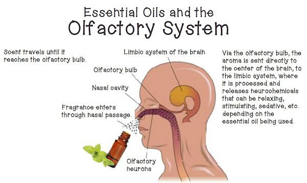 olfactory image